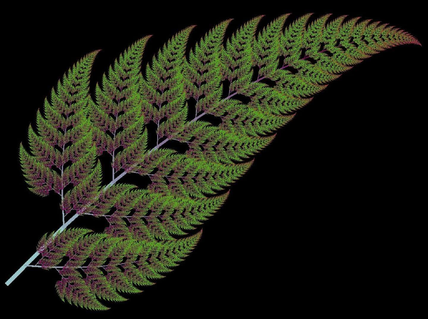 Ferns Use Fractal Geometry To Grow Fronds Amazing Zone