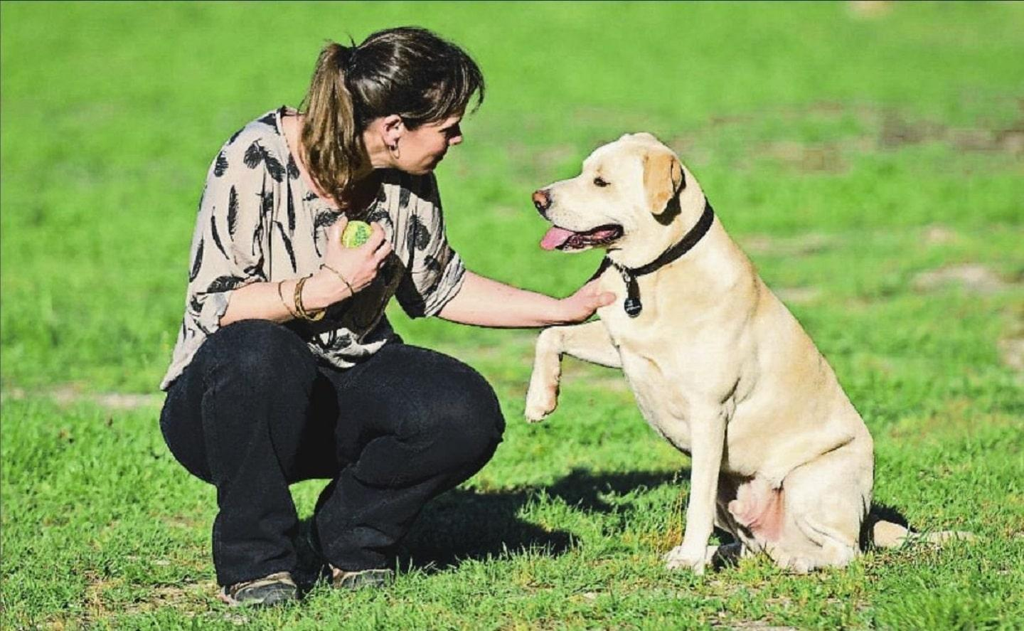 Sniffer Dogs to detect Lung Cancer forecasting